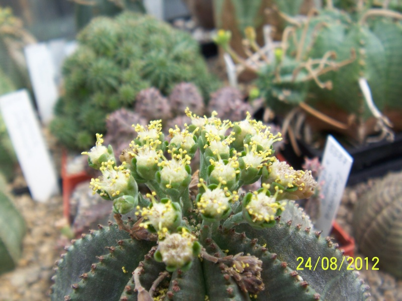 Cacti and Sukkulent in Köln, every day new flowers in the greenhouse Part 30   Bild_933