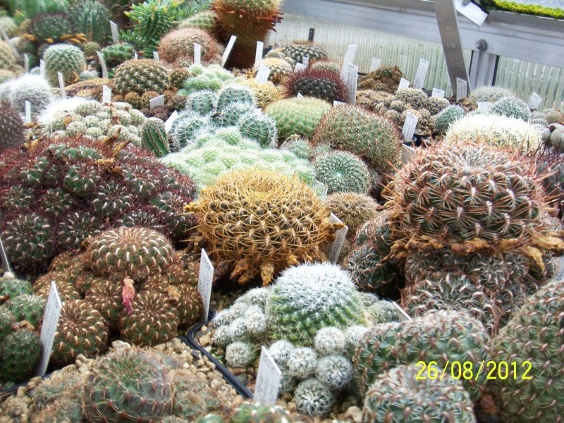 Cacti and Sukkulent in Köln, every day new flowers in the greenhouse Part 30   Bild_939