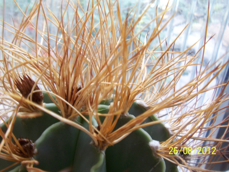 Cacti and Sukkulent in Köln, every day new flowers in the greenhouse Part 30   Bild_946