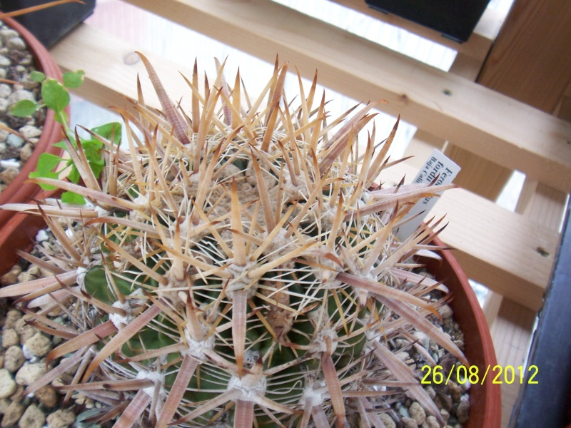 Cacti and Sukkulent in Köln, every day new flowers in the greenhouse Part 30   Bild_948