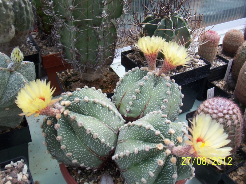 Cacti and Sukkulent in Köln, every day new flowers in the greenhouse Part 30   Bild_959