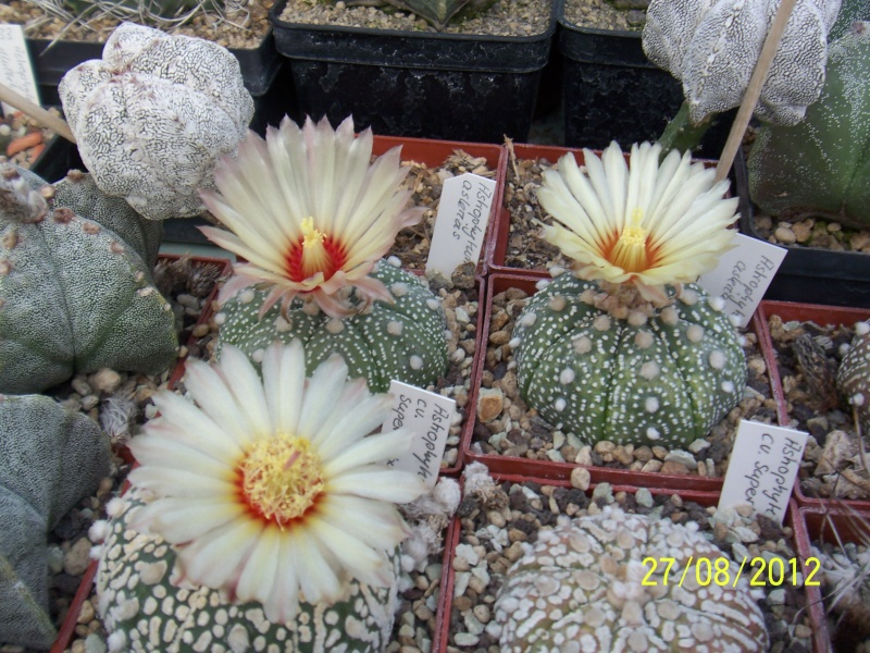 Cacti and Sukkulent in Köln, every day new flowers in the greenhouse Part 30   Bild_965