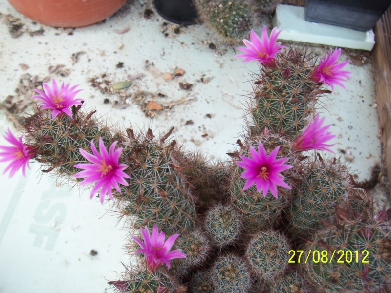Cacti and Sukkulent in Köln, every day new flowers in the greenhouse Part 30   Bild_970