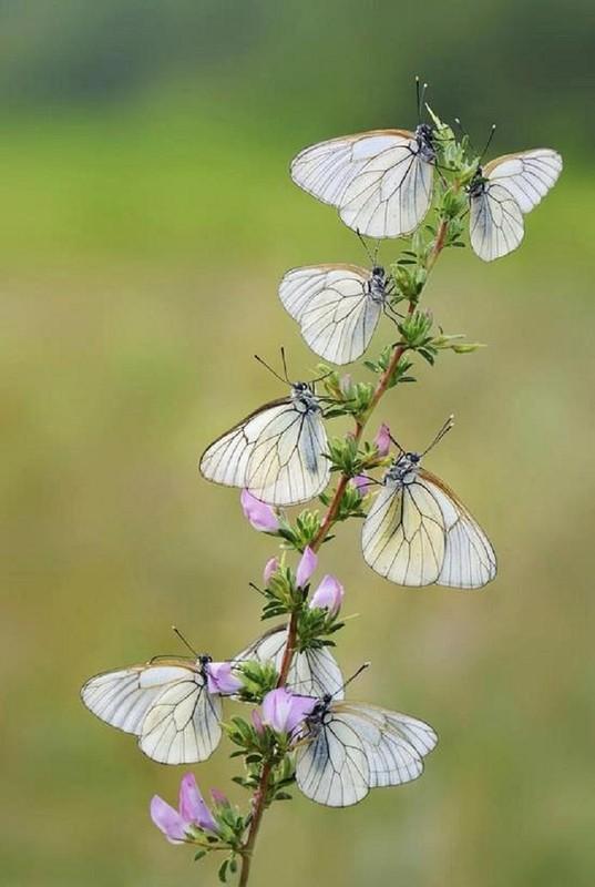 Le monde merveilleux des insectes - Page 4 0e973210