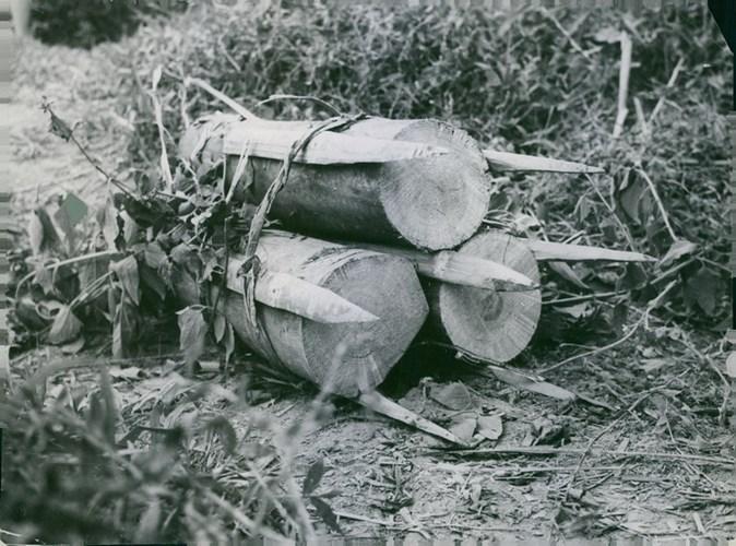 Les pièges en bambou Vietcong (Booby traps) partie 2 20160210