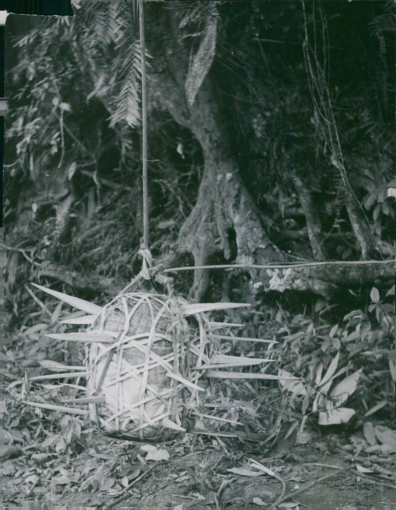 Les pièges en bambou Vietcong (Booby traps) partie 2 23797910