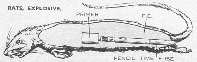 Les pièges en bambou Vietcong (Booby traps) partie 2 Animal10