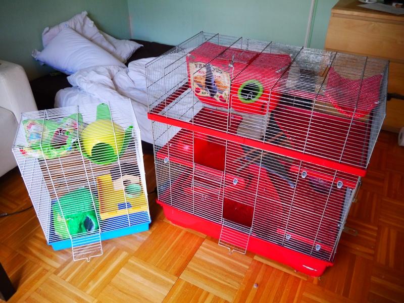 Vends grande et petite cage (RP) Cage_e10