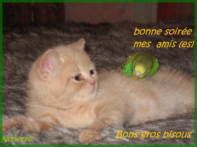 Bonjour / bonsoir du mois de juillet - Page 3 93834510
