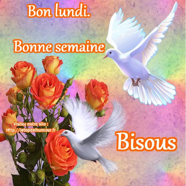Bonjour / bonsoir du mois de septembre Bon-lu10