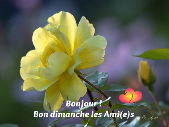 Bonjour / bonsoir du mois de juillet - Page 2 Dimanc10