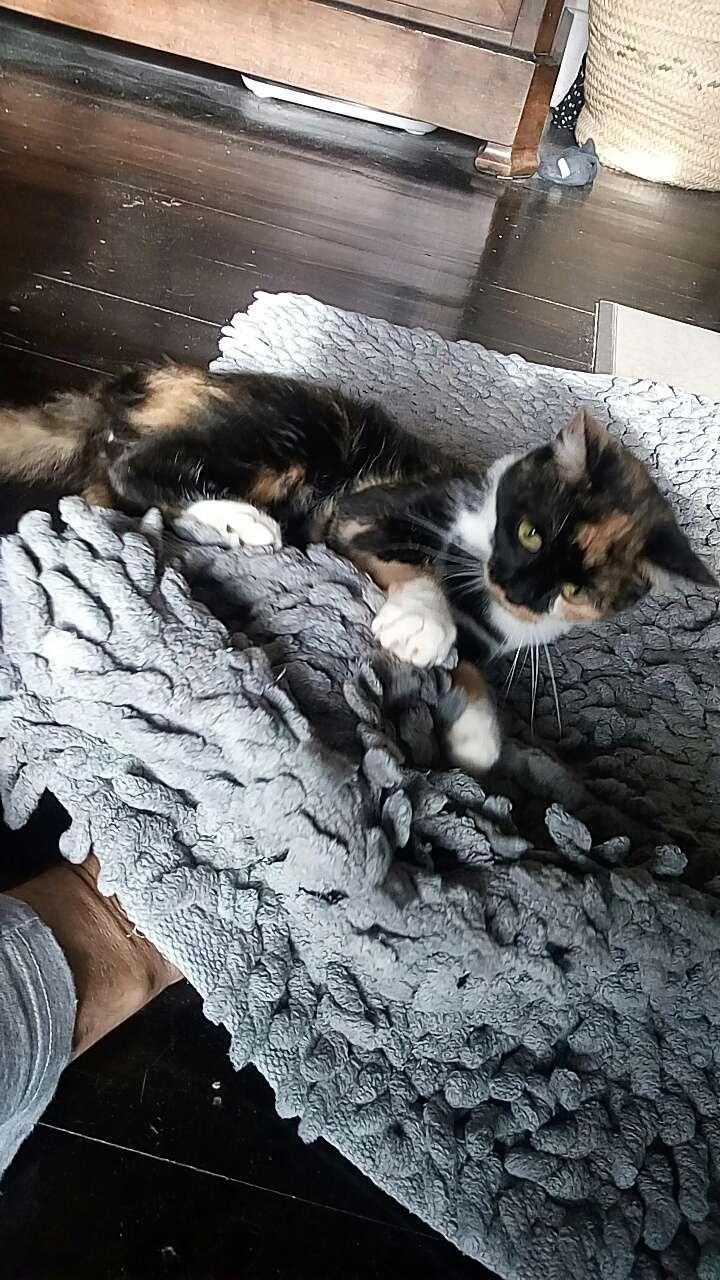 nilla née en novembre 2016 (réservée) Snapch11