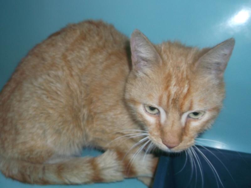 Urgent! recherche de co-voit pour un chat de fourrière de Ploeren à Concarneau pour le 27/07! Photos10
