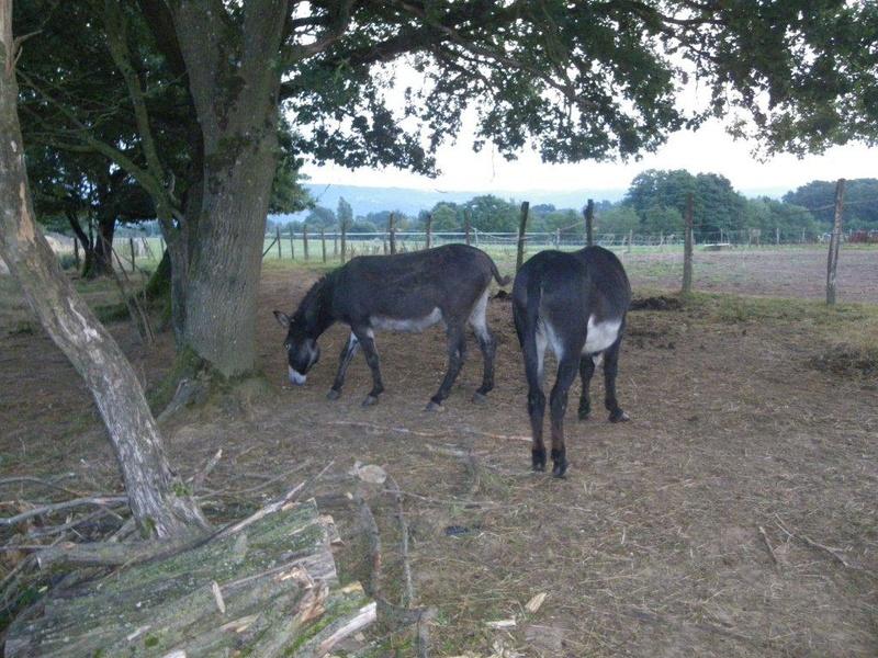 (dpt 71) A ADOPTER, MILAN et ZADIG, ânes communs, en famille d'accueil chez Charly71 - Page 5 Imgp0013