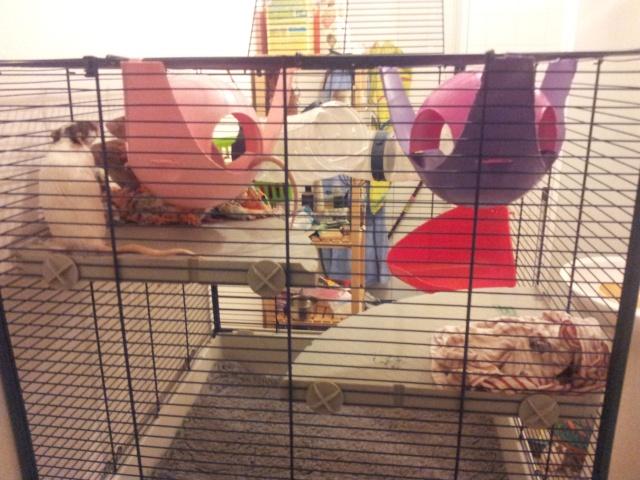 Vends cage Furet Tower  20121210