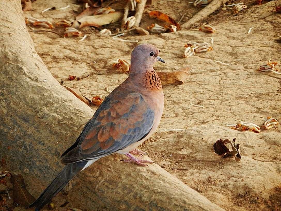 Les oiseaux du Sénégal 10_10