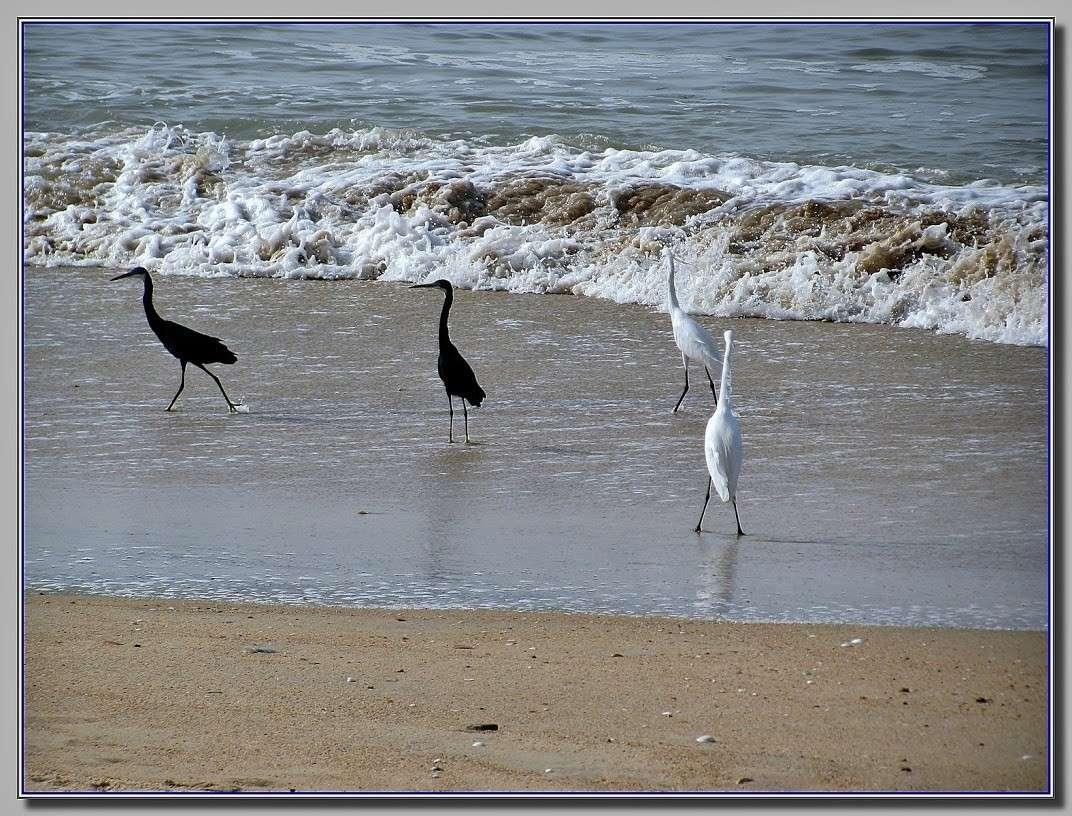 Les oiseaux du Sénégal 3_oise10