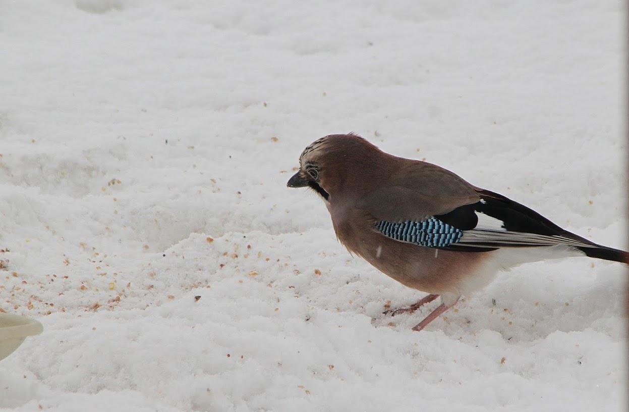 hiver 2012 chez Zette Img_3013