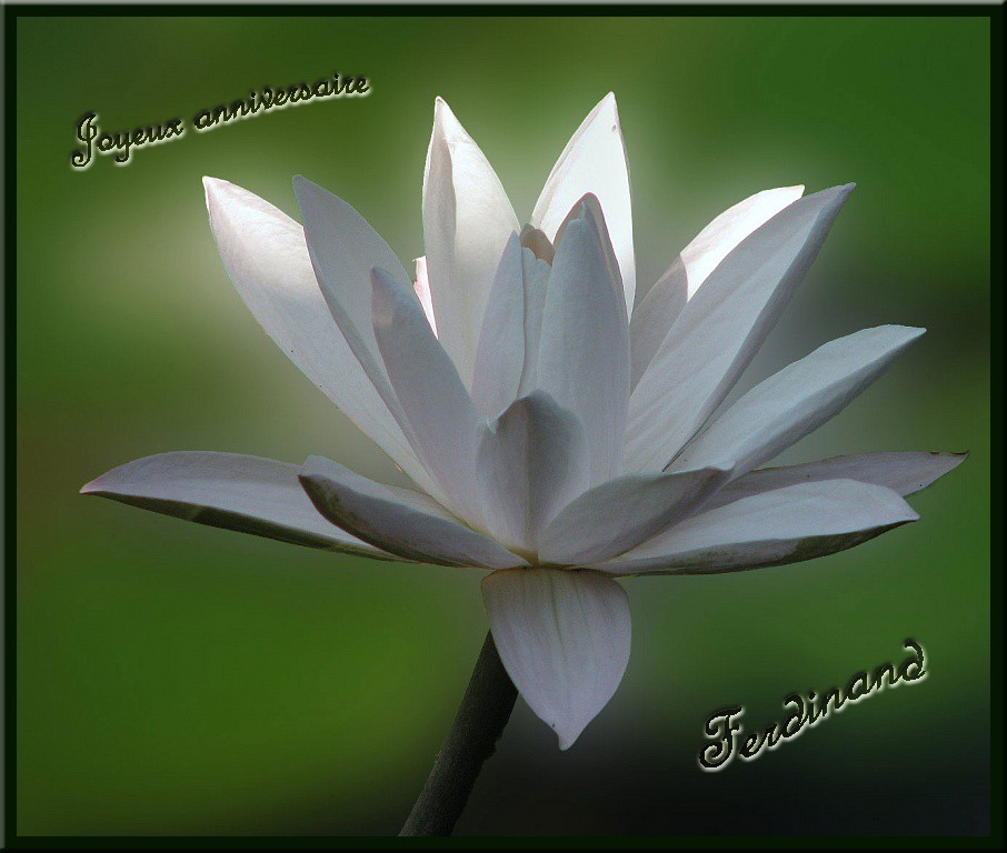 JOYEUX ANNIVERSAIRES F1 PASSION ET FERDINAND Lotus010