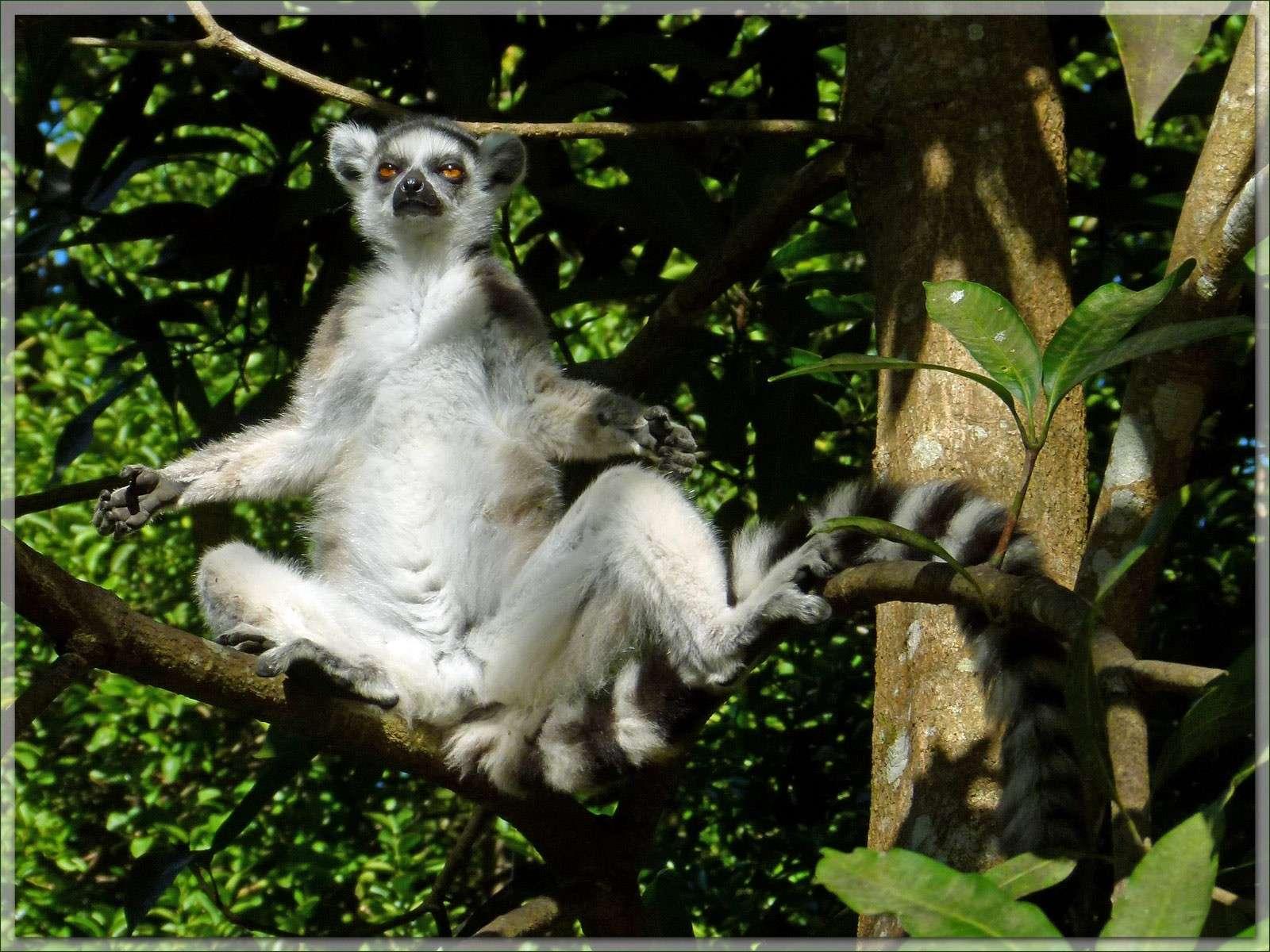 MADAGASCAR 2012 P1240410