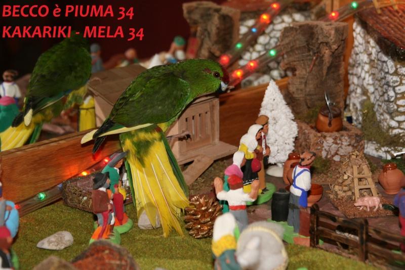 Présentation de Becco et Piuma 34 Mela_311