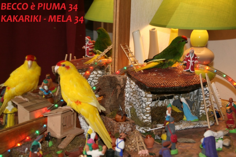 Présentation de Becco et Piuma 34 Mela_312