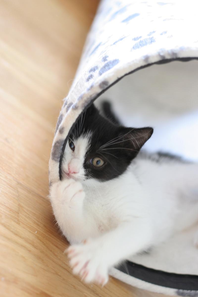 neary - Neary, chatonne noire et blanche née le 12/06/17 Img_8720
