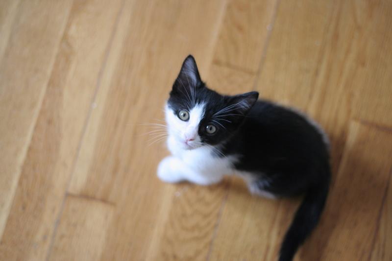 neary - Neary, chatonne noire et blanche née le 12/06/17 Img_8722