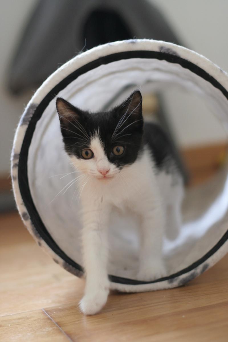 neary - Neary, chatonne noire et blanche née le 12/06/17 Img_8811