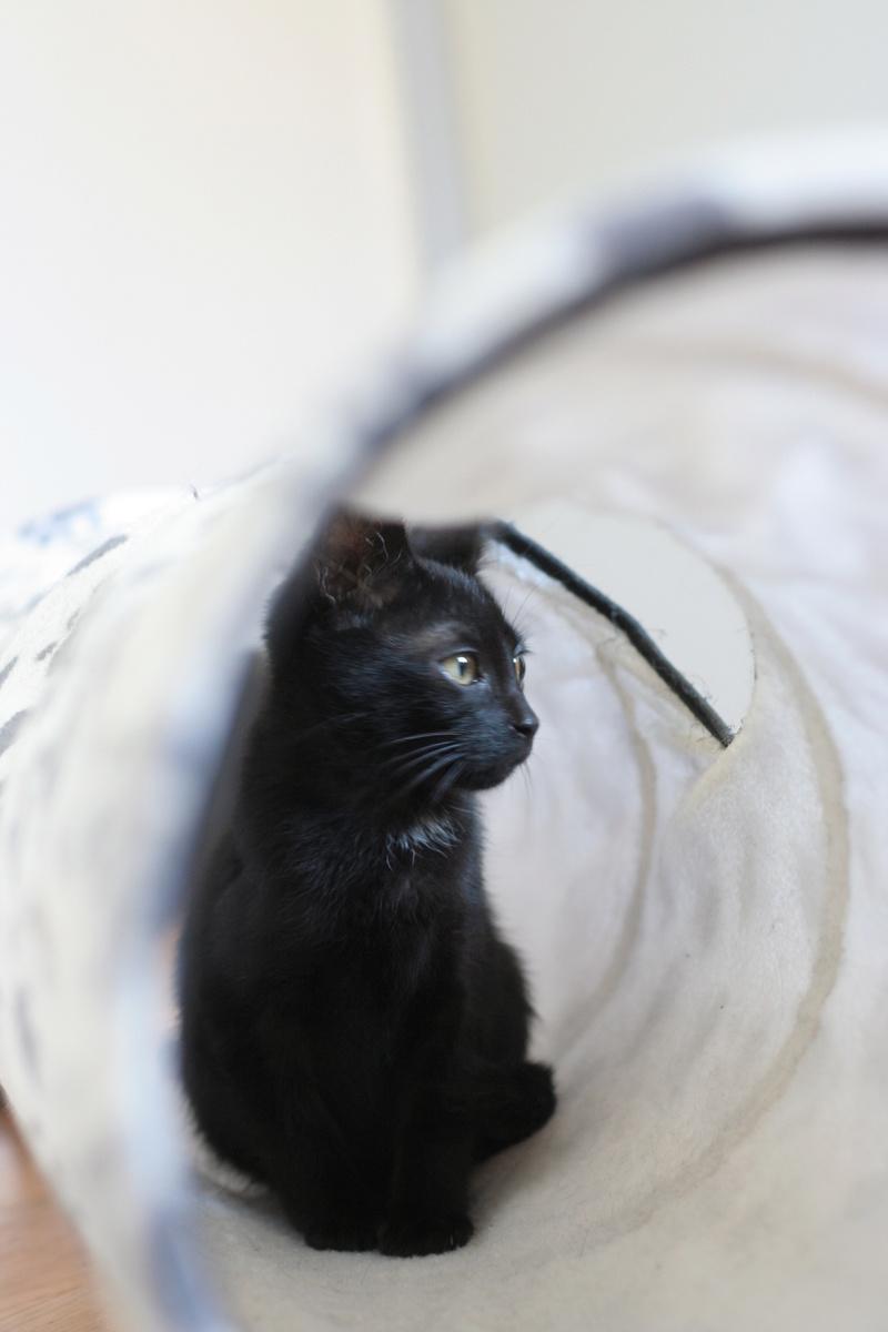 Néji, chaton noir, né le 30/05/17 Img_9013