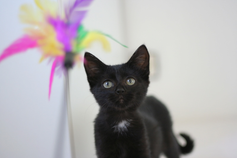 nubie - Nubie, chatonne noire, né le 30/05/17 Img_9015