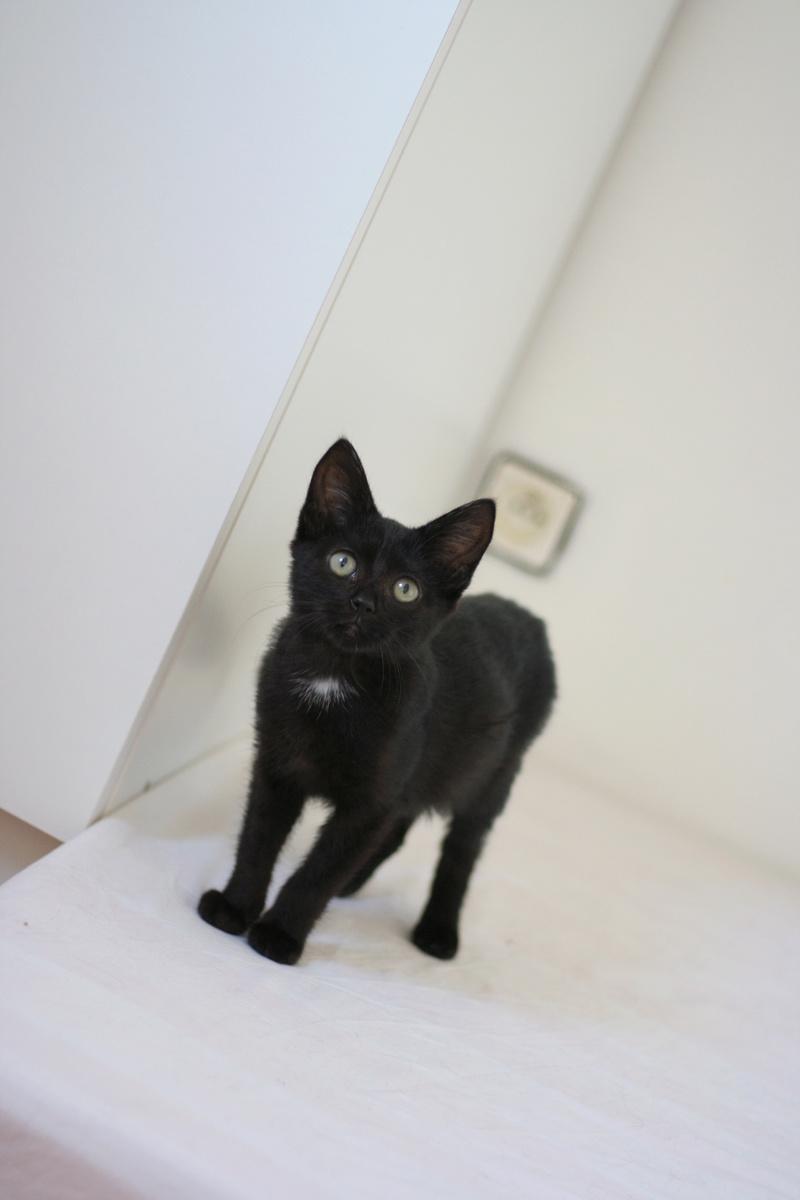 nubie - Nubie, chatonne noire, né le 30/05/17 Img_9016