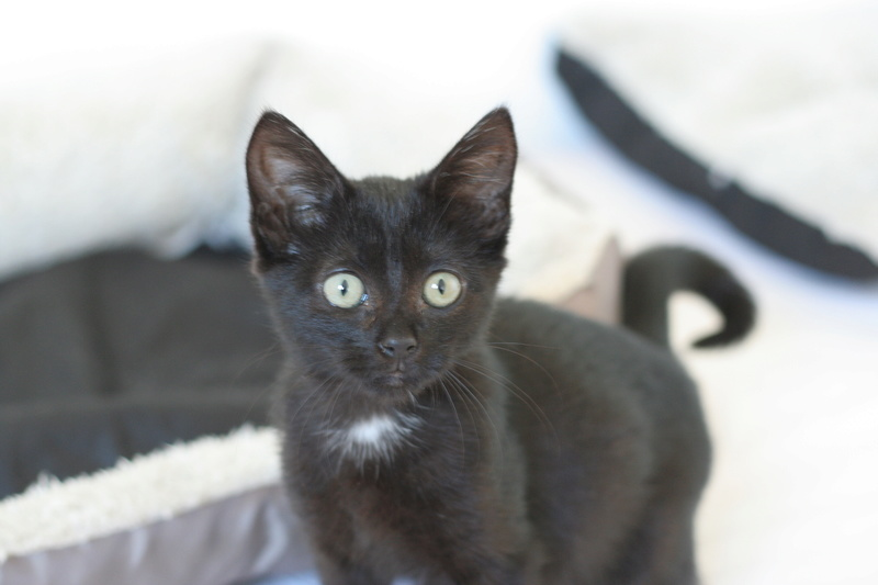 nubie - Nubie, chatonne noire, né le 30/05/17 Img_9017