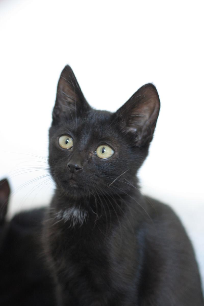 Néji, chaton noir, né le 30/05/17 Img_9121