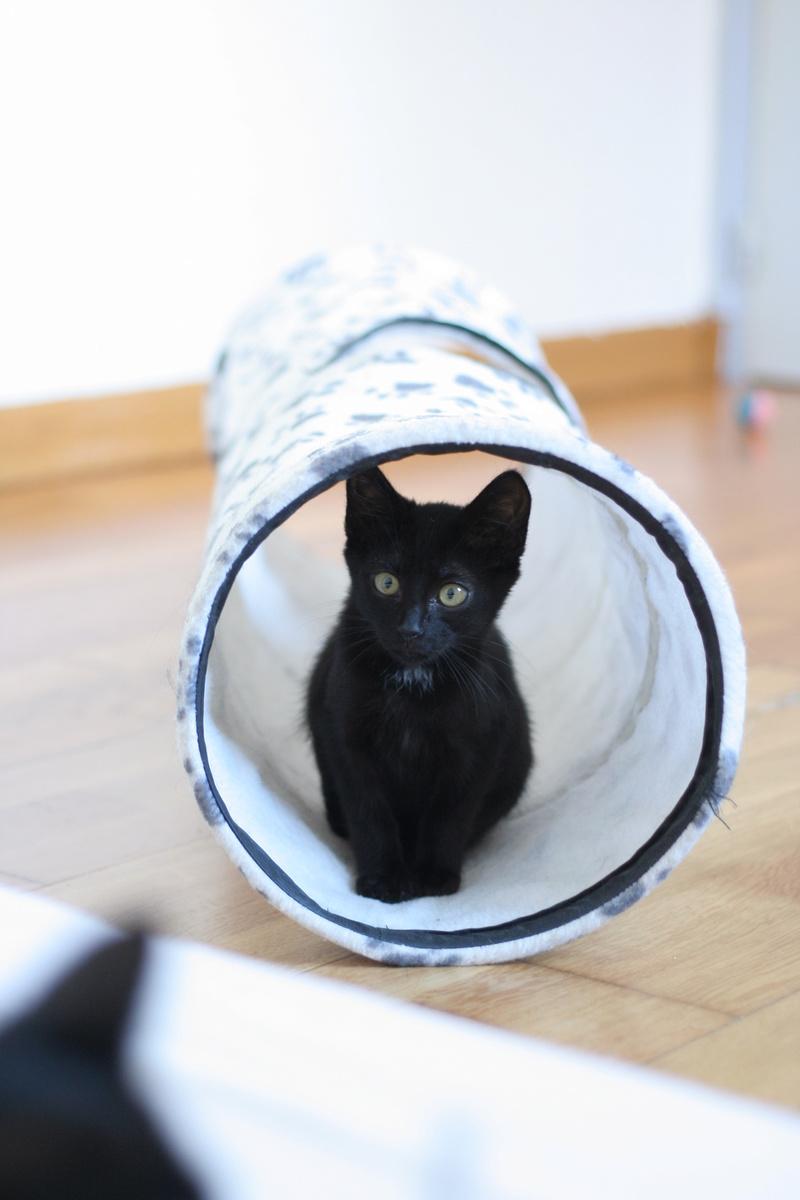 Néji, chaton noir, né le 30/05/17 Img_9122