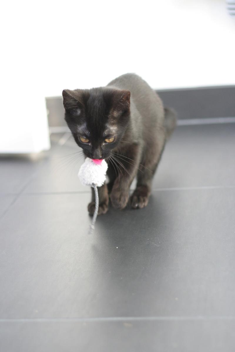 Néji, chaton noir, né le 30/05/17 Img_9210