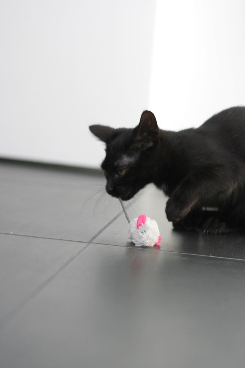 Néji, chaton noir, né le 30/05/17 Img_9211