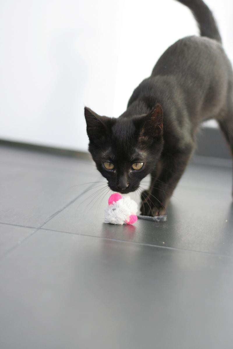 Néji, chaton noir, né le 30/05/17 Img_9212