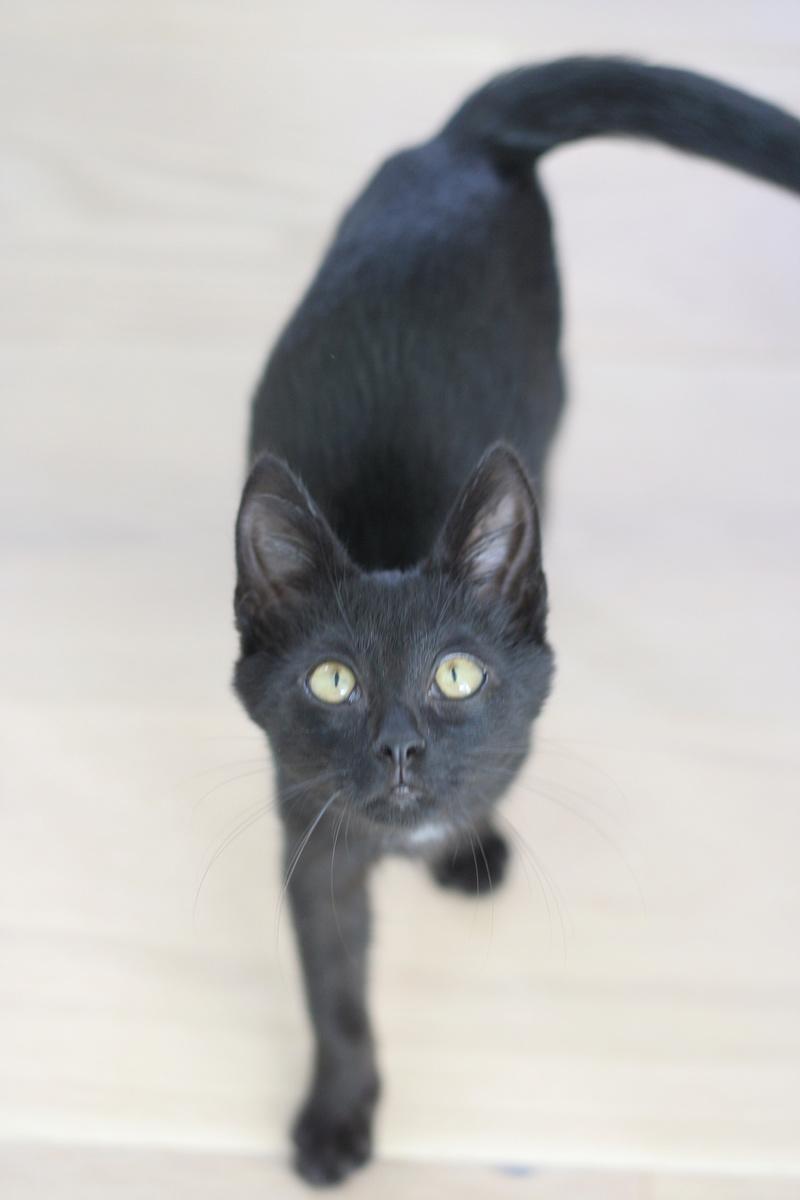Néji, chaton noir, né le 30/05/17 Img_9213