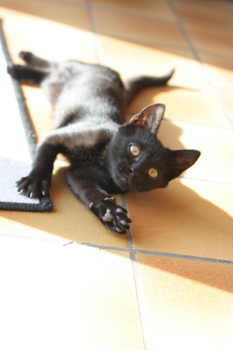 Néji, chaton noir, né le 30/05/17 Img_9310