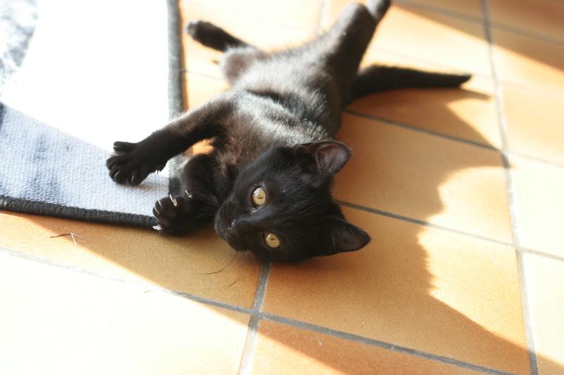 Néji, chaton noir, né le 30/05/17 Img_9312