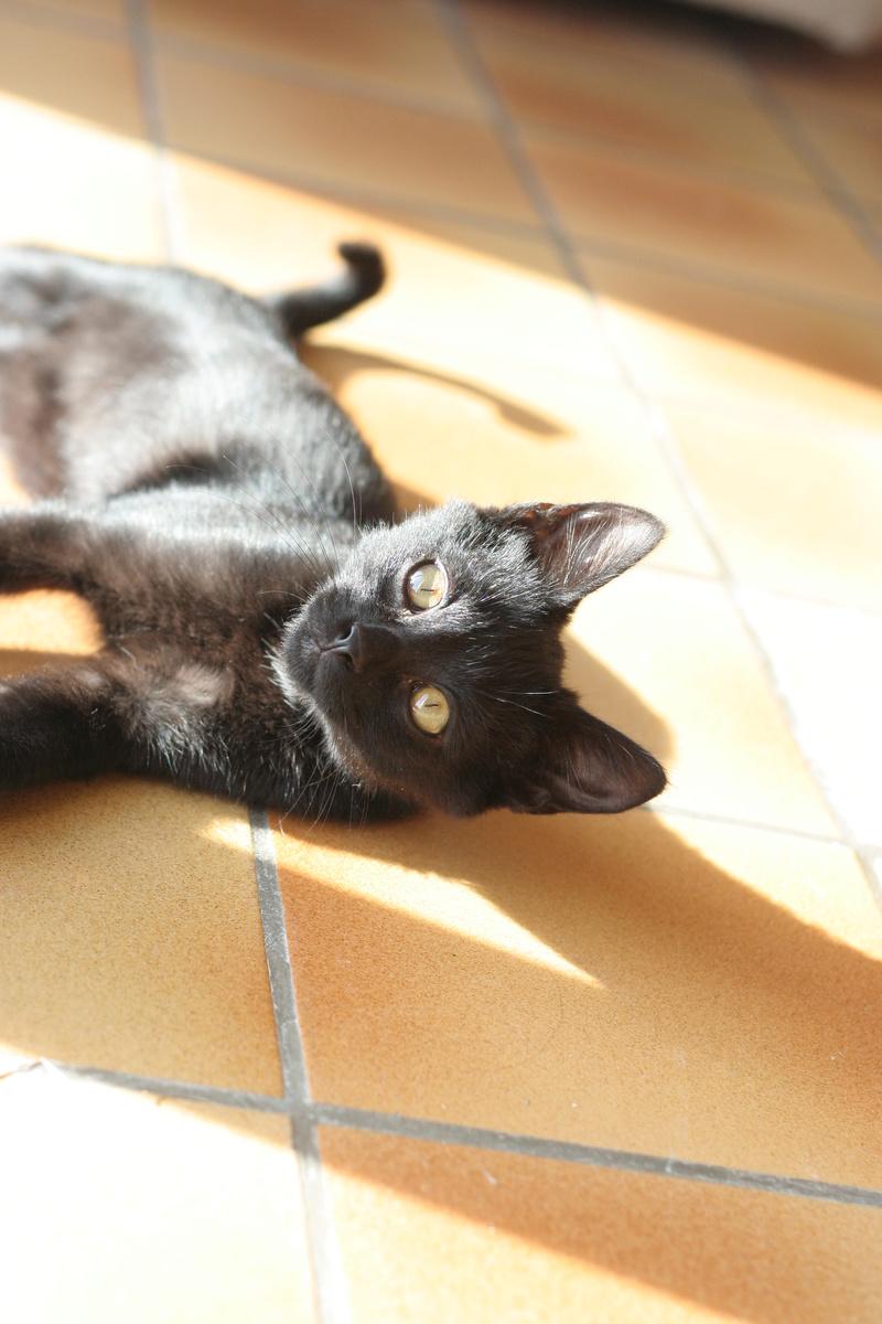 Néji, chaton noir, né le 30/05/17 Img_9313
