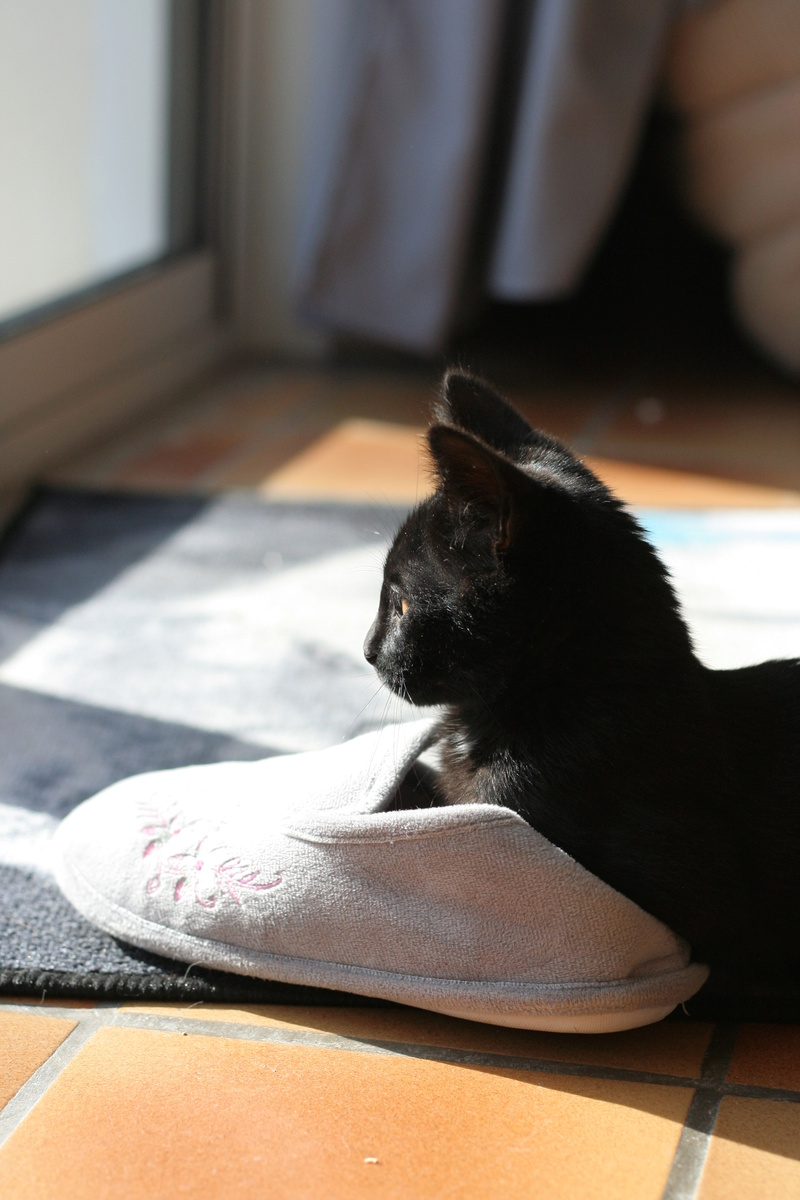 Néji, chaton noir, né le 30/05/17 Img_9314