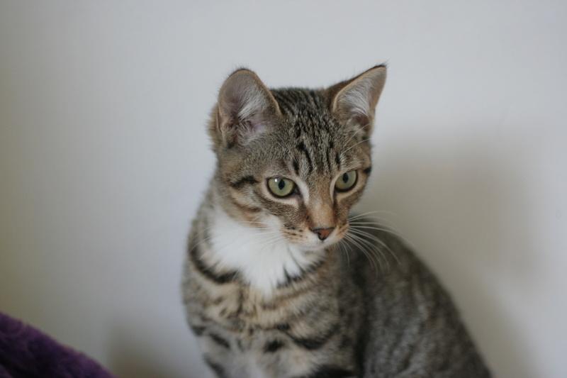 niro - NIRO, chaton mâle tigré, né le 22/05/17 Img_9419