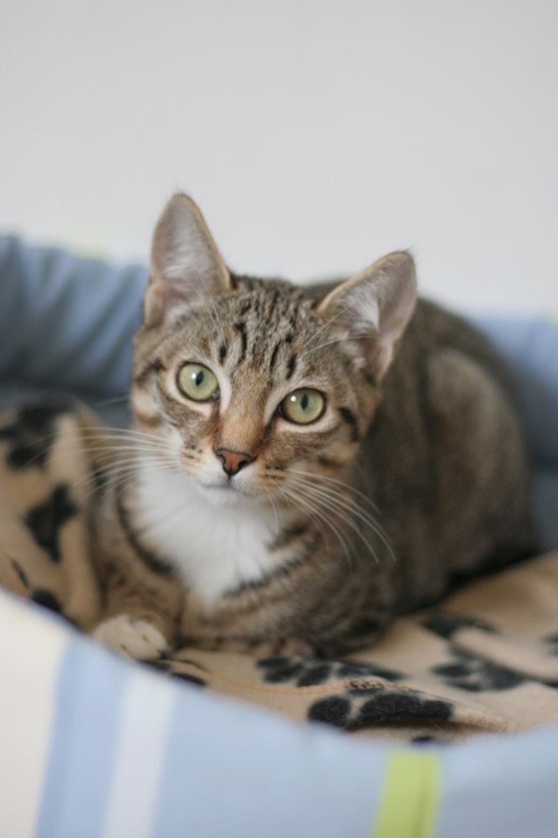 niro - NIRO, chaton mâle tigré, né le 22/05/17 Img_9420