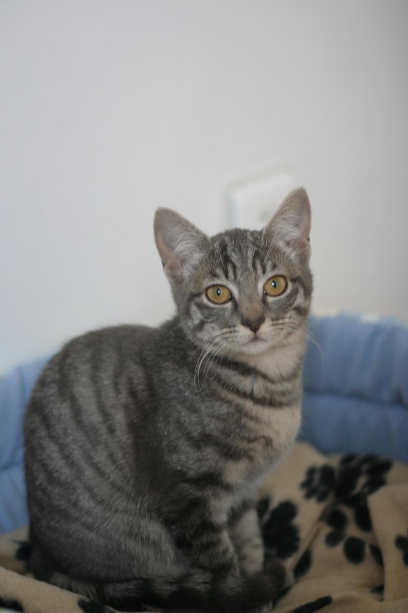 NIET, chatonne tigrée, née le 22/05/17 Img_9422