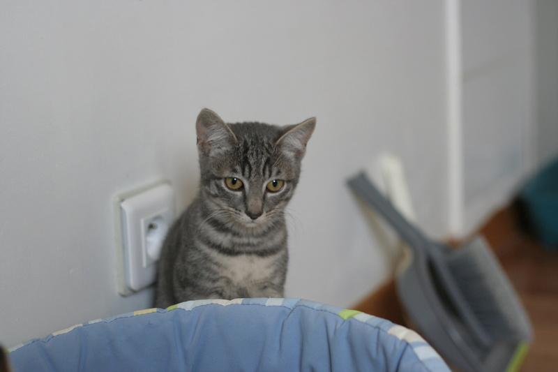 NIET, chatonne tigrée, née le 22/05/17 Img_9423
