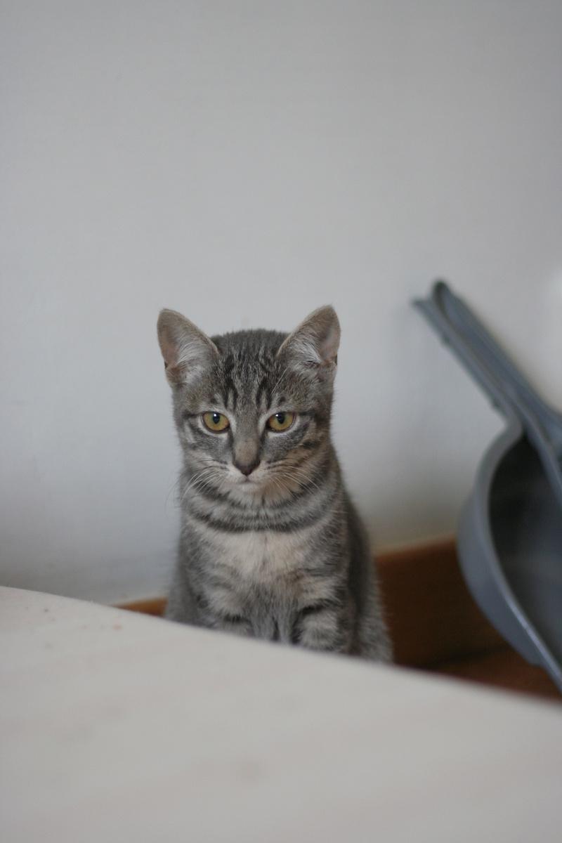 NIET, chatonne tigrée, née le 22/05/17 Img_9515