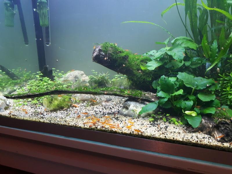 Mur végétal avec aquarium de 320L ---> Paludarium - Page 16 20170610