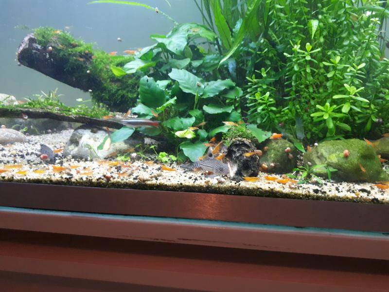 Mur végétal avec aquarium de 320L ---> Paludarium - Page 16 20170611